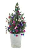 盆的圣诞树 库存图片