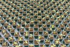 盆的幼木行自温室 图库摄影