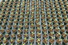 盆的幼木行自温室 库存照片