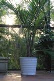 盆的棕榈露台在佛罗里达 免版税图库摄影