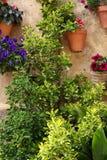 盆的植物和花在庭院里 免版税库存照片
