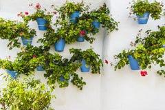 盆的植物和花在马尔韦利亚,马拉加街道上温泉 库存图片