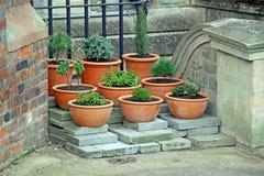 盆的植物和花 图库摄影