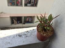 盆的植物在阴影掩藏 图库摄影