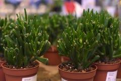 盆的植物待售在宜家商店 免版税图库摄影