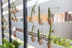 盆的植物仙人掌吊 免版税库存图片