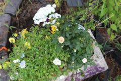 盆的植物c 免版税库存照片