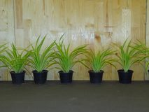 盆的盆的植物和胶合板墙壁背景 免版税图库摄影