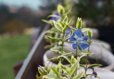 盆的花在庭院里 免版税库存照片