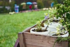 盆的花在庭院里 库存照片