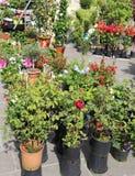 盆的花待售在花上地方市场  库存照片