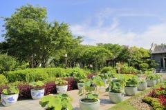 盆的莲花在中国古典庭院里,多孔黏土rgb 库存照片