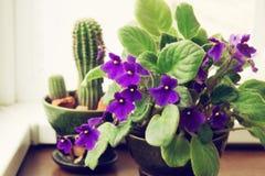 盆的非洲紫罗兰和仙人掌 免版税库存照片