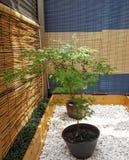 盆的鸡爪枫在一个小禅宗庭院里坐后面大阳台 免版税库存照片