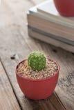 盆的仙人掌植物在桌上 库存照片
