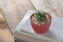 盆的仙人掌植物 免版税图库摄影