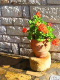 盆花的桔子 免版税库存照片