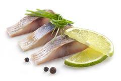 盐内圆角鲱鱼 库存照片