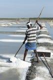 盐农田劳工印度 免版税库存图片