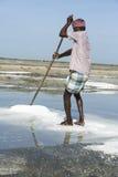 盐农田劳工印度 图库摄影