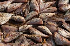 盐味的干鱼 免版税库存照片