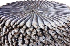 盐味的沙丁鱼 免版税库存图片