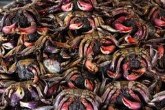 盐味的螃蟹 免版税库存照片