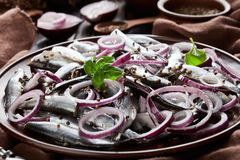 盐味的西鲱布料用卤汁泡与在陶器板材芫荽子、棕色布料、叉子和刀子的红洋葱圆环  免版税库存照片