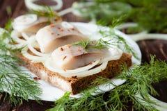 盐味的鲱鱼内圆角用在白色板材和莳萝的面包 免版税库存照片