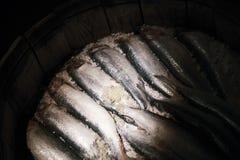 盐味的鲱鱼特写镜头照片在木桶的 免版税库存照片