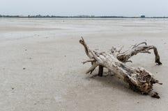 盐场在塞浦路斯 库存照片