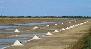 盐场在oleron海岛 库存图片