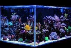 盐水水族馆,珊瑚礁坦克场面在家 免版税库存照片