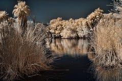 盐水湖掌上型计算机 库存照片