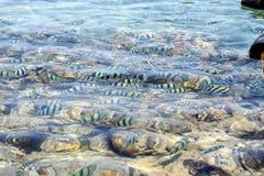 盐水湖红海 库存照片