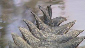 盐水部份鳄鱼的尾巴在水中 股票视频