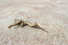 盐沙漠 免版税库存图片