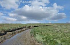 盐沼, Eiderstedt半岛,北海,德国 免版税库存图片