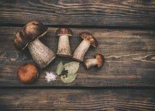 盐溶的蘑菇 库存照片