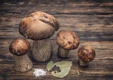 盐溶的蘑菇 免版税库存图片