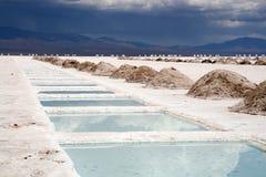 盐的阿根廷 库存图片