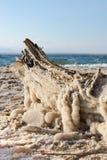 盐盖了死海漂流木头 免版税库存图片
