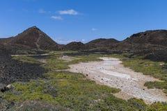 盐草甸加那利群岛 库存照片
