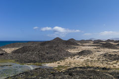 盐草甸加那利群岛 库存图片