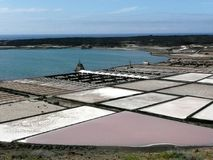 盐领域收获 库存图片