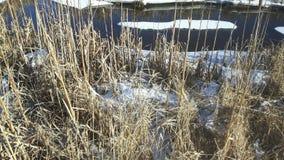 盐水沼泽加拿大人冬天 免版税库存图片