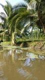 盐水湖哥斯达黎加 库存照片