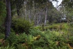 盐水湖森林在Donana 库存图片