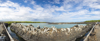 盐水湖的全景和自然在加拉帕戈斯 免版税库存图片