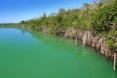 盐水湖美洲红树玛雅里维埃拉岸 免版税库存图片